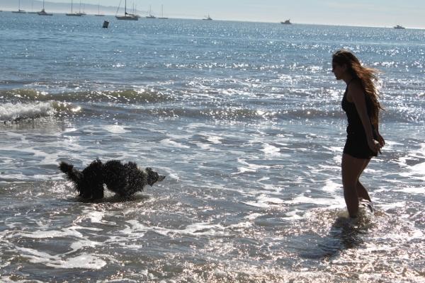 Avila Beach with border collie puppy