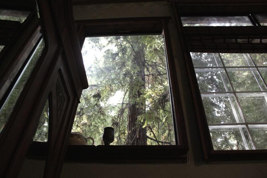 Redwoord treehouse inside windows 1