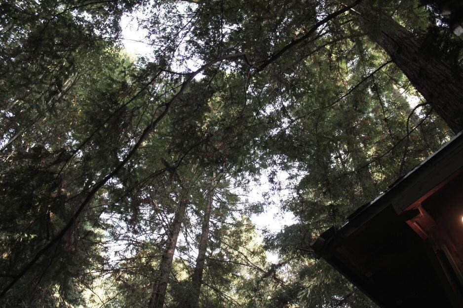 redwood treehouse eco luxury getaway looking up