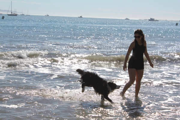 Avila Beach with border collie puppy