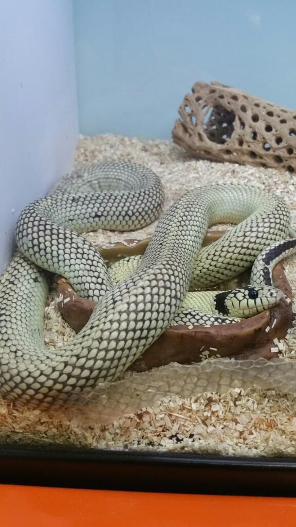 snake at Super Zoo